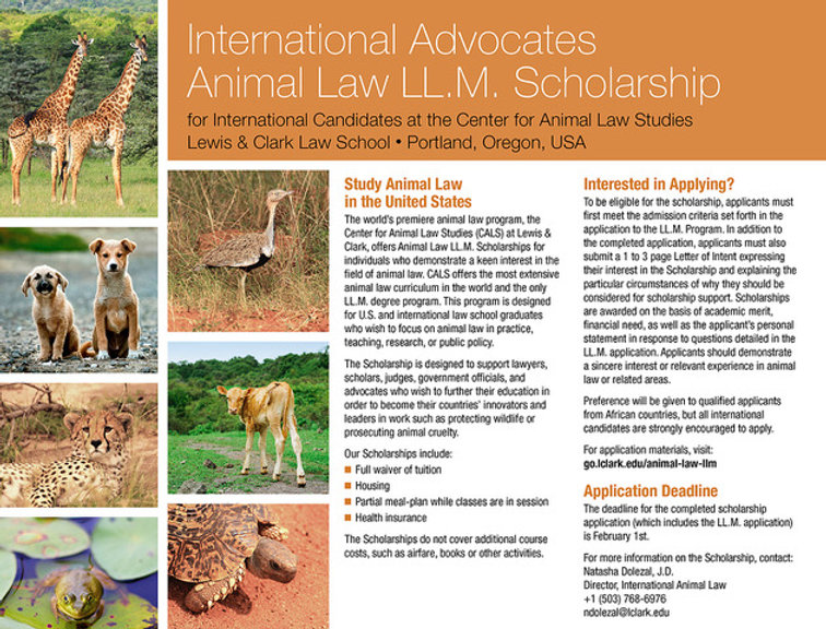 Animal-Law-LL.M-scholarship.jpeg