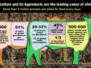 Understanding the Links Between Industrial Animal Agriculture and Climate Change; Options for Policy