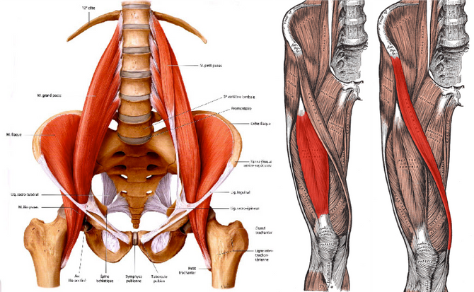 Hip Mobility and Strength for Athletes