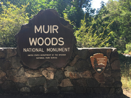 Visiting The Muir Woods