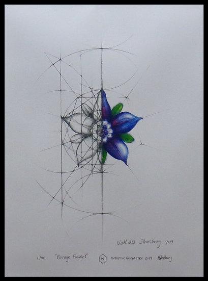 BORAGE FLOWER. Signed, limited-edition print by Nathalie Strassburg