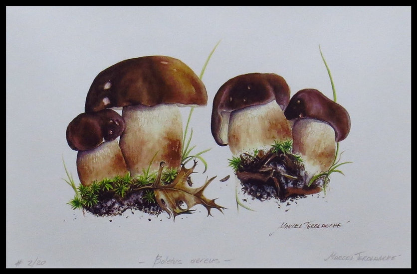 BOLETUS AEREUS. Signed, limited-edition print by Marcel Terblanche