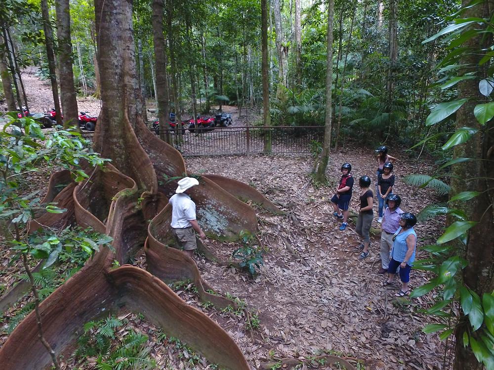 Crowsfoot ash during tour- Kuranda Rainforest Journeys