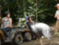 Cassowary encounter with Kuranda rainforest tour