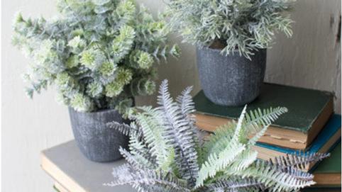 Set of 3- Fern Succulents in Round Grey Pot
