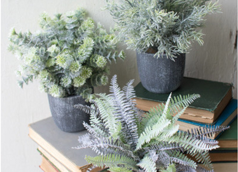 Set of 3- Fern Succulents in Round Grey Pot