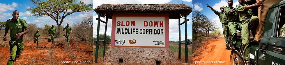 Wildlife Works Rangers - Protect Elephants