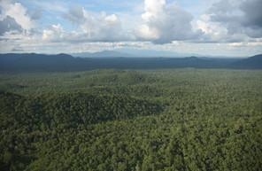 Southern Cardamom Rainforest