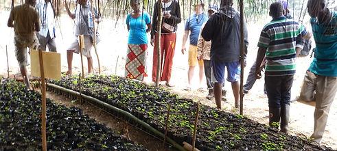 Wildlife Works Mai Ndombe REDD+ Project