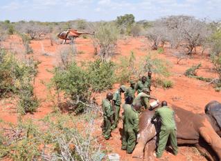 Injured Elephant Gets Treated