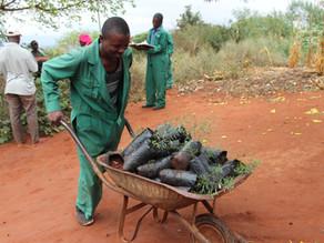 Community-led Reforestation