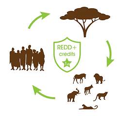 Wildlife Works REDD+ Projects
