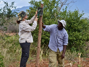 Kasaine Fences; A Solution to Human-Wildlife Conflict?