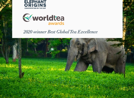 Elephant Origins Wins Top Award at World Tea Expo 2020