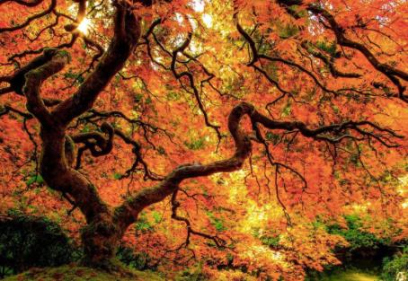 Notre lien avec la Nature