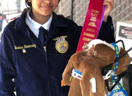 Santa Barbara County Fair 2019