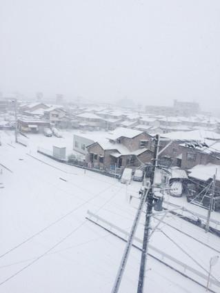 雪にうろたえる