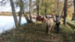 Stage d'équitation dans l'ain