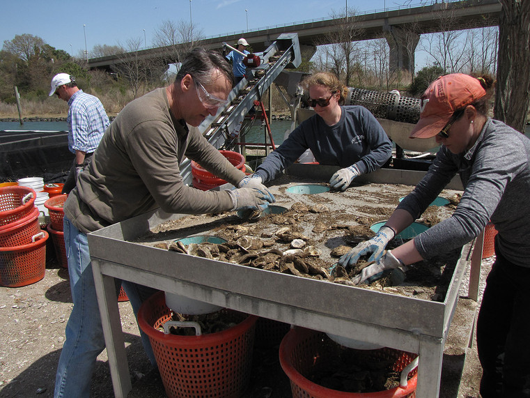 Shell sorting in action