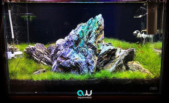 Aquaworld-fresh-water-1.jpg