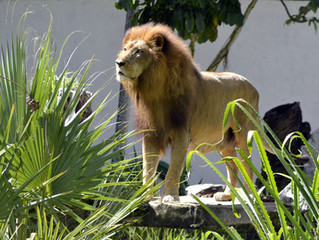 Um rei na selva de pedras