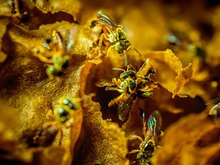 A importância na conservação das abelhas