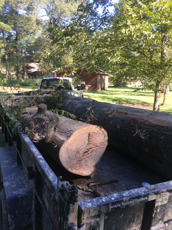 Tree Removal1