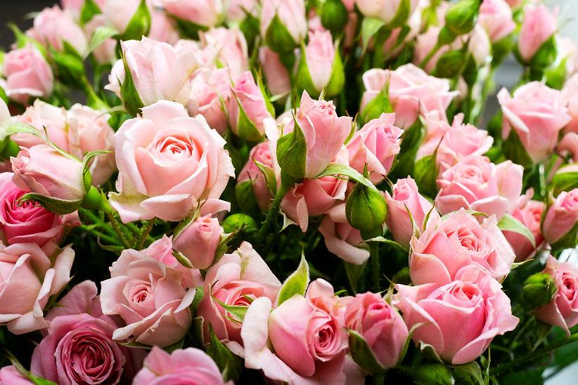 pink-roses-close-up-floral-wall-internat