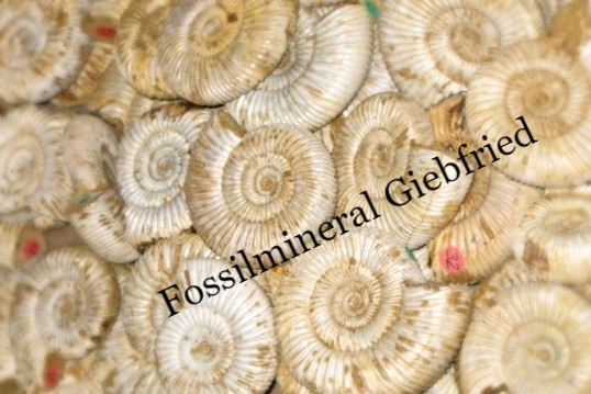 Fossilmineral Giebfried