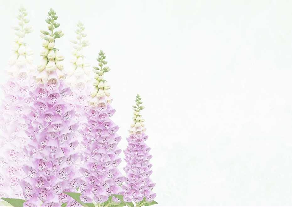 Foxgloves.png