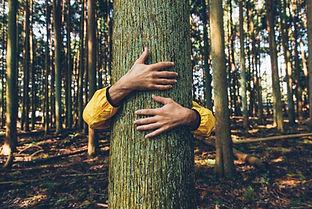 woodland breather.jpg