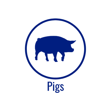 Pig Icon.png