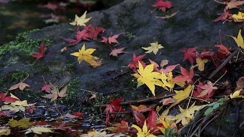 Gratitude of leaves