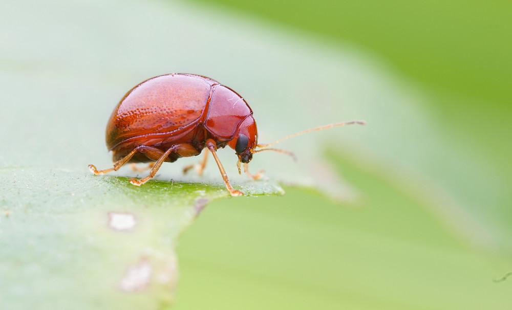 insect macro shot