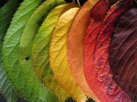 autumn-leaves-1460734_1920.jpg
