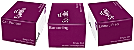Split Bio Single Cell Whole Transcriptome Kit