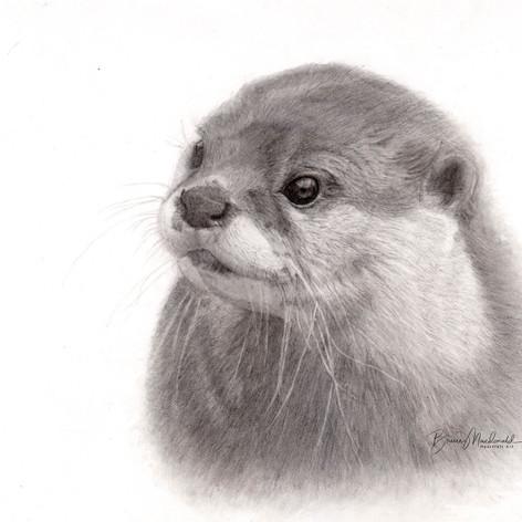 Otter Delight