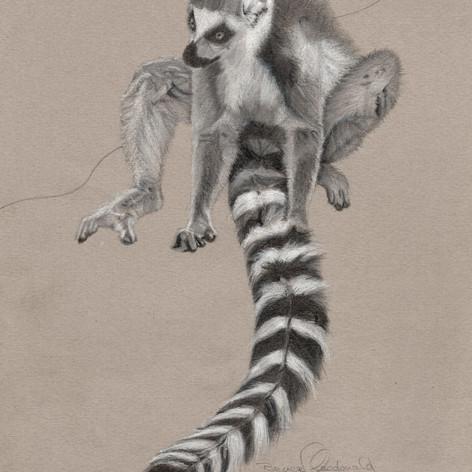 Lemur Delight