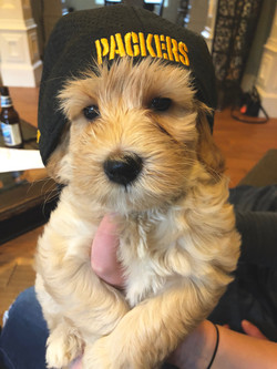 Packer's Fan!