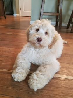 Daisy Past Puppy