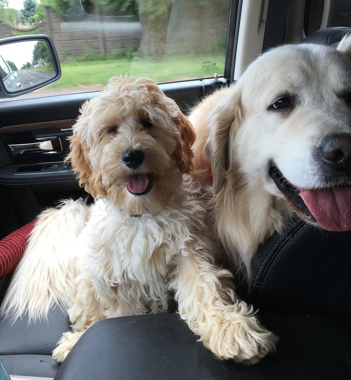 Gracie & Sampson