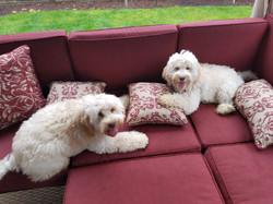 Daisy Past Puppies