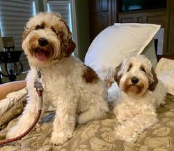Oscar & Ruby (mama)