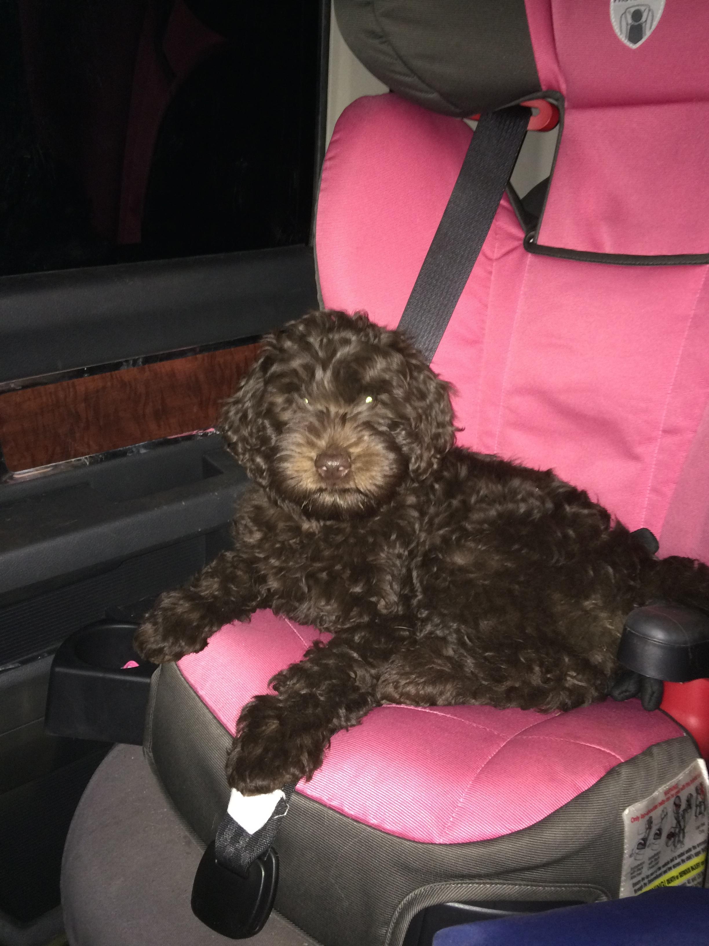 River - Keeping Emma's car seat warm