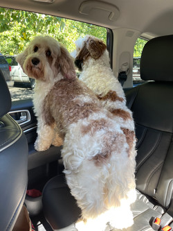 Mom & Daughter heading to the vet
