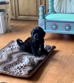 Trying out the new dog bed