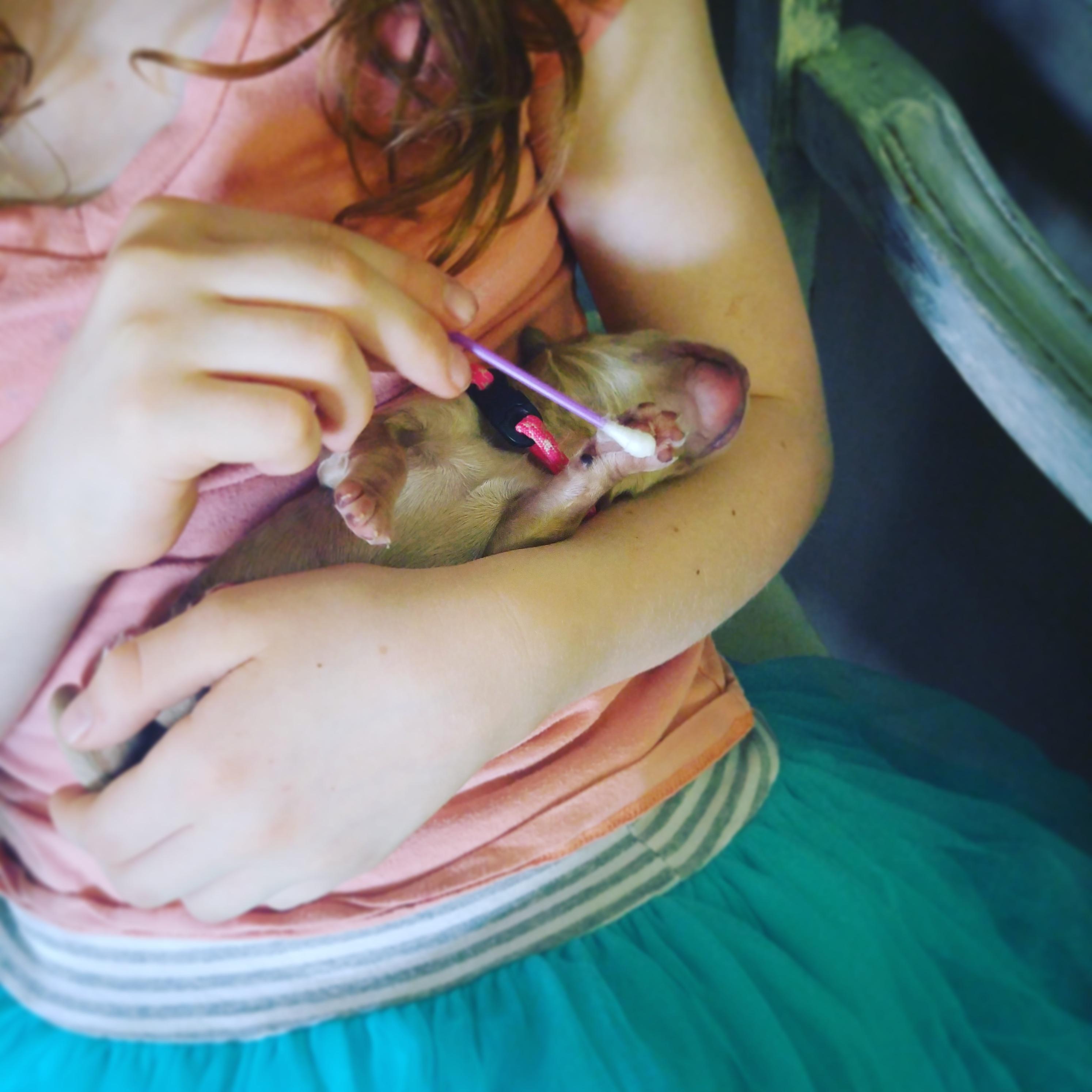 Australian Labradoodle Bio-sensory