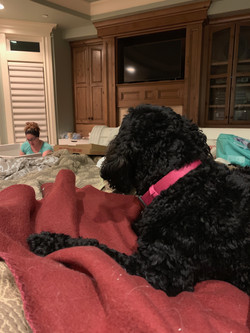 Watching Lola whelp