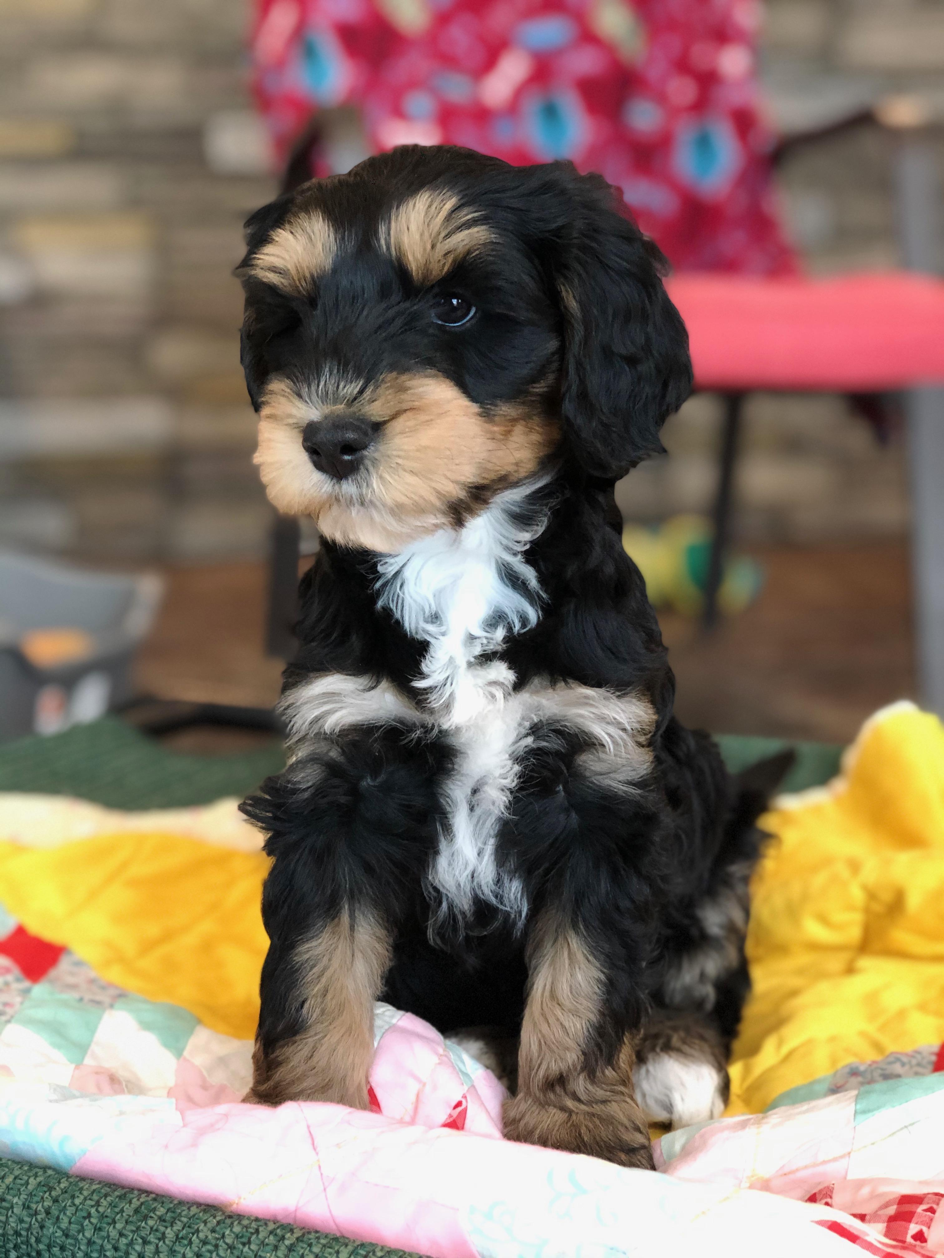 Huck as a puppy