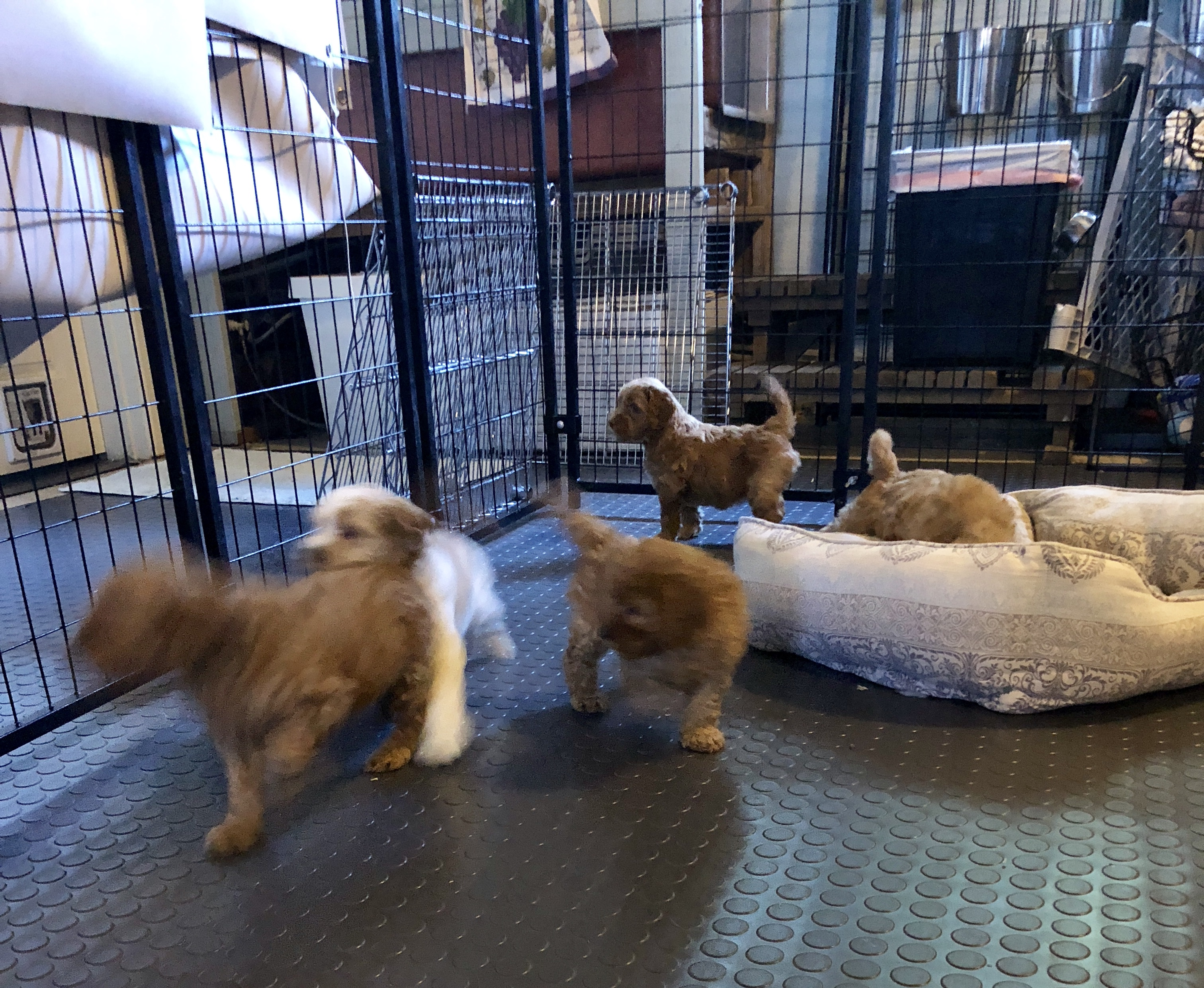 Introduction to the puppy nursery
